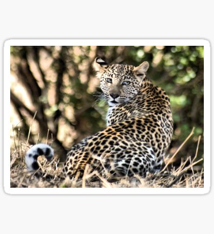 THE LEOPARD - Panthera pardus - Luiperd Sticker