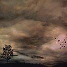 Migration by Scott Mitchell