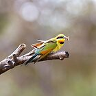 Rainbow Bee Eater with Bee by mncphotography
