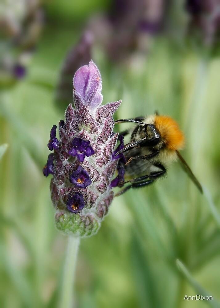 Collecting Nectar by AnnDixon