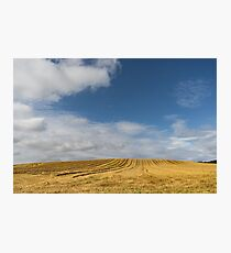 Rows of Straw -  Photographic Print