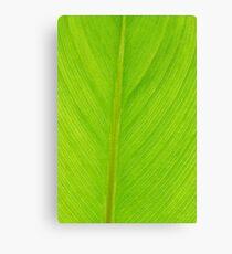 bright green fresh leaf closeup background vertical Canvas Print