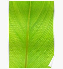 bright green fresh leaf closeup background vertical Poster