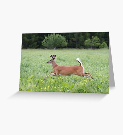 White-tailed deer in flight Greeting Card
