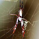Web Design! by Jodie Napier