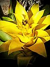 Bromeliad Yellow by Terri Chandler