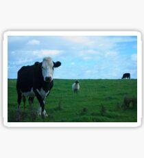 Kühe und ein Schaf Sticker