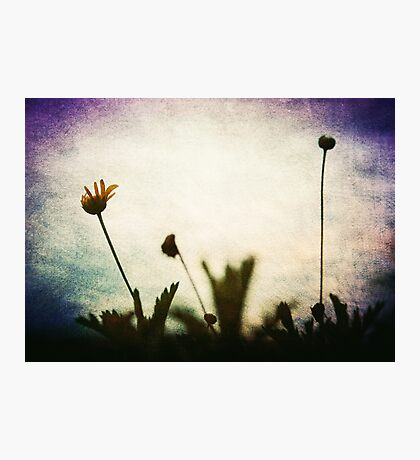 """""""Love is the flower you've got to let grow"""" John Lennon  Photographic Print"""