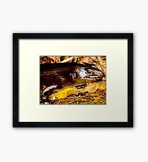 Land Mullet  Framed Print