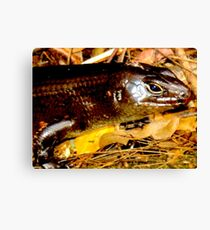 Land Mullet  Canvas Print