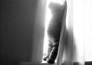 Mikino - Behind the Veil 6 by Jaeda DeWalt