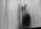 Mikino - Behind the Veil 8 by Jaeda DeWalt