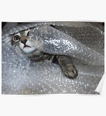 Mikino bubble-wrapped Poster