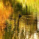 Duck On Golden Pond by WildestArt