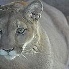 Mountain Lion in the Living Desert by Michele Conner