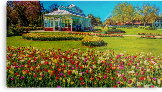 Oil on Canvas - Springtime Tulips at the Conservatory Gardens by sjphotocomau