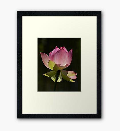 Filtering Light...... Framed Print