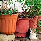 Cat in the garden by Riko2us