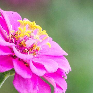 Pink Floral by mechalamatthews