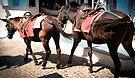 Pair of donkeys by Riko2us