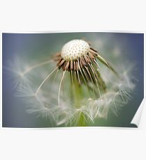 Common Dandelion Poster