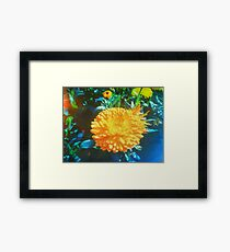 YELLOW MARIGOLD VINTAGE INDIA Framed Print