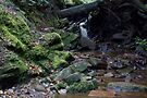 Waterfall in Goyt Valley by Tom Page