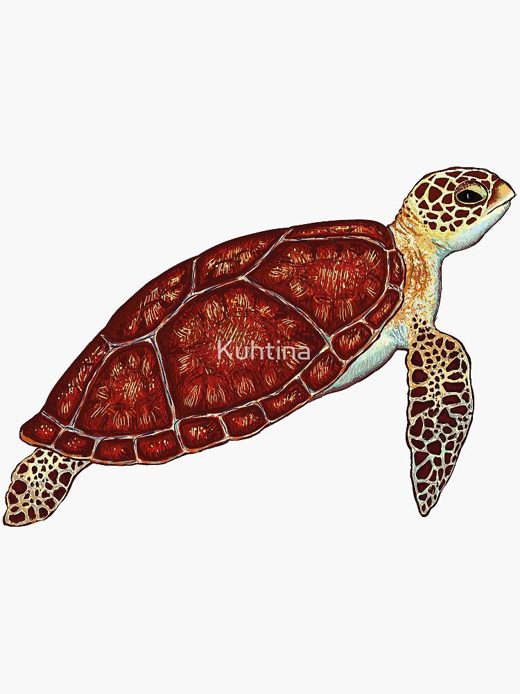 Schildkröte von Kuhtina