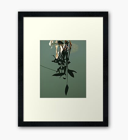 Reflections of Leaves Framed Print