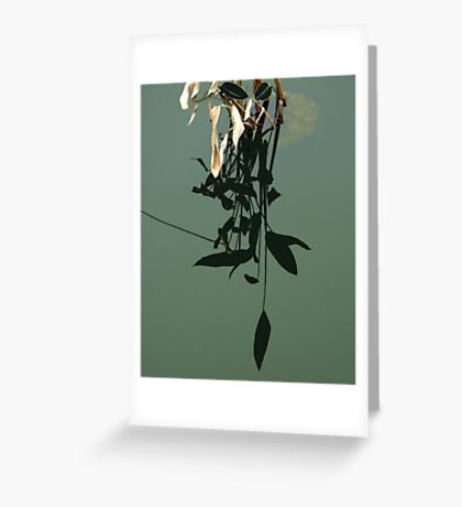 Reflections of Leaves Greeting Card