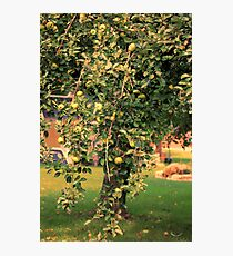 Apple Tree In A Small Town Photographic Print