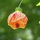 Summer Flower (Biltmore Ballgown) by Marriet