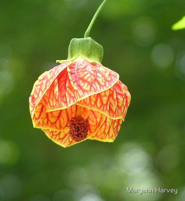 Summer Flower (Biltmore Ballgown) by Maryann Harvey
