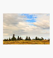 high wild plants at the mountain top Photographic Print
