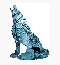 Wild Forest Wolf - Turquoise Photographic Print