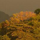 naturaleza - atardecer en la sierra by Bernhard Matejka