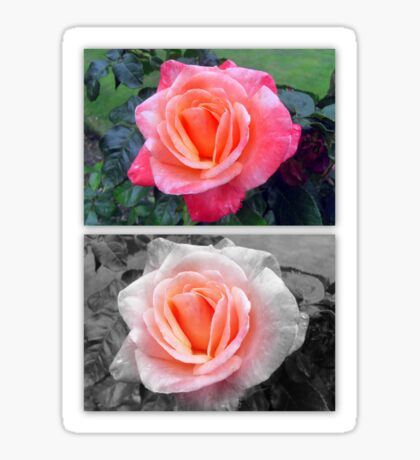 Rose Greetings  Sticker