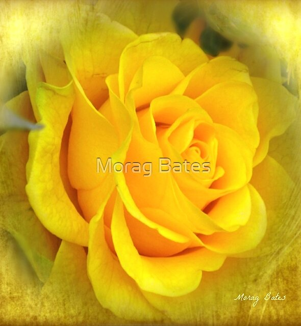The Midas Touch by Morag Bates