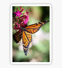 Monarch Danaus Plexippus Sticker
