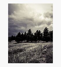 Odin in the field Photographic Print