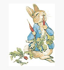 Peter Bunny Photographic Print