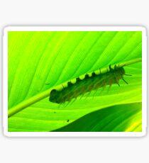 The Very Hungry Caterpillar Sticker
