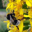 The Bee by Bente Agerup