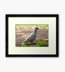 pigeons in the park Framed Print