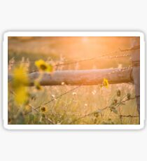 Roadside Country Fence and Sunflowers Sticker