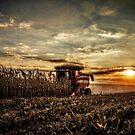 Sunset Harvest by Steve Baird