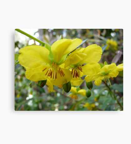 Perfectely Dressed in Yellow for Spring  Canvas Print