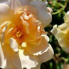 The Goldbusch Rose by Kathleen Daley
