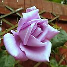 Lonely Rose von BlueMoonRose