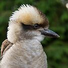 Laughing Kookaburra by M S Photography/Art